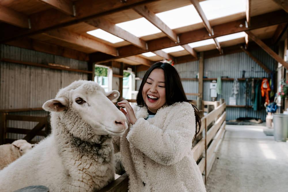 glenorchy sheep farm